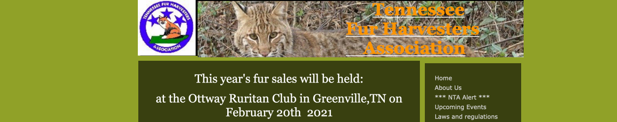 how to sell coyote pelts